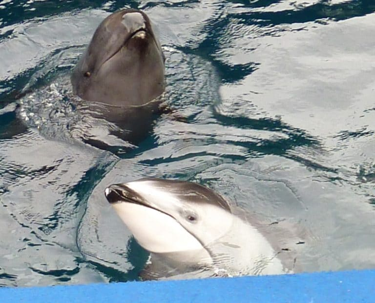 Canada ends whale and dolphin captivity