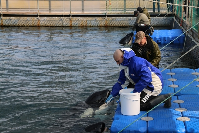 Scientists offer help to Putin to help free captured whales