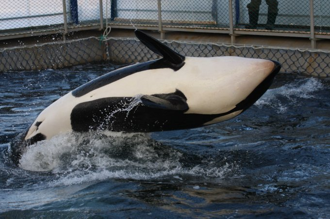 Is a good outcome possible for the jailed whales in Russia?