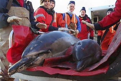 art-dolphins1-420x0