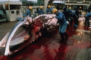 Another Korean newspaper and another local NGO calls for a pull back on whaling plans