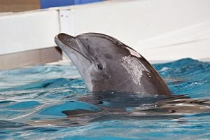 Why are there no captive whales or dolphins in the UK?