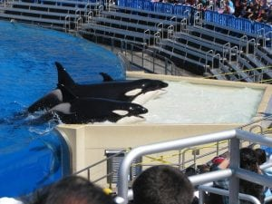 SeaWorld CEO steps down as attendances fall again