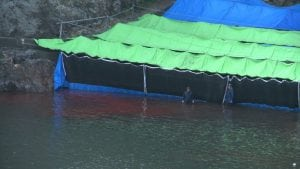 World Association of Zoos suspends Japanese member over dolphin hunt support