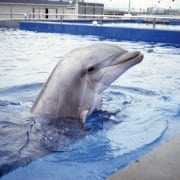 Mexico City bans dolphinariums
