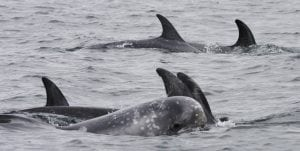 Familiar Fins and Hybrid Dolphins