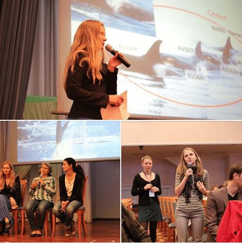 Wissenschaftler erheben ihre Stimme gegen Orcafänge in Russland