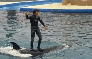 SeaWorld stops trainers standing on dolphins