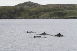 Must do better. Report critical of marine protection in Wales