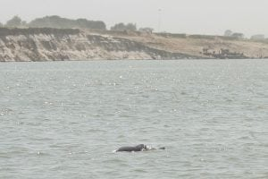 Endangered dolphins disappearing from river in Bangladesh