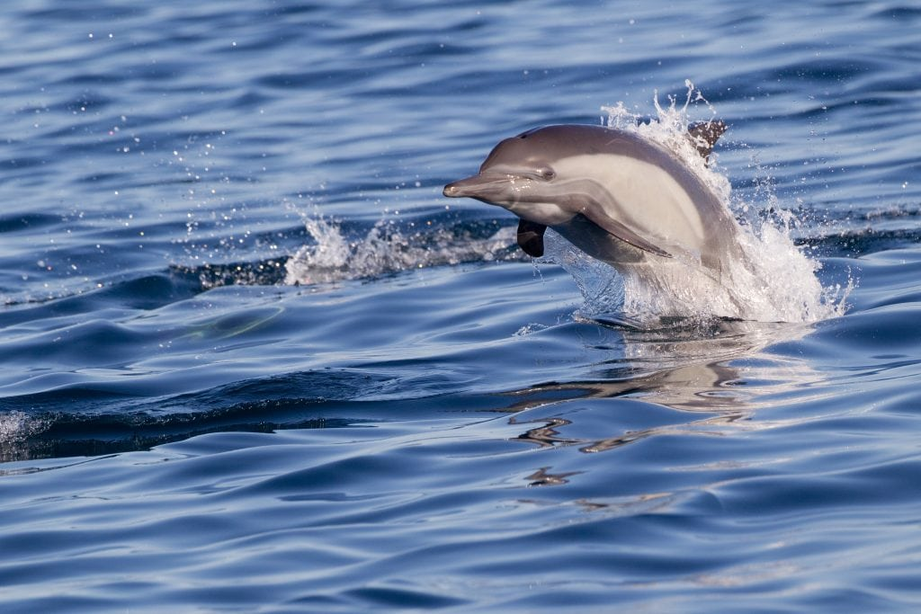 Darwin Initiative boosts whale and dolphin protection work in Senegal