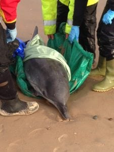 New report reveals increase in whale and dolphin strandings in UK