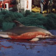 bycatch_common_dolphin_blood