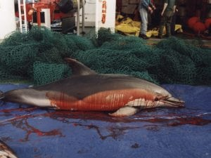 Thousands of dolphin deaths likely in Spain and France as EU fails to act