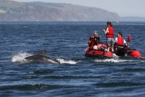 UK's wildlife police unit launch public awareness drive with WDC to counter increasing dolphin disturbance