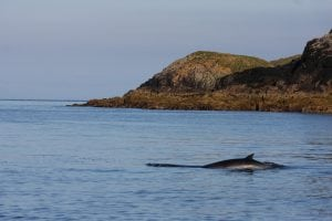 Hope for whales and dolphins as 'world first' protected areas proposal is announced in Scotland