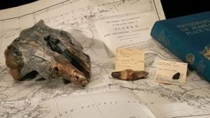 Fossil of river dolphin relative identified after 65 years
