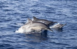 Sri Lanka to crack down on illegal sale of whale and dolphin meat