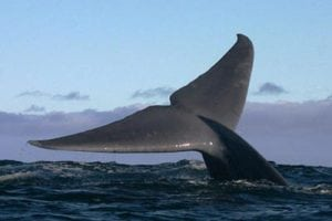New documentary to expose secrets behind massive Russian whale slaughter