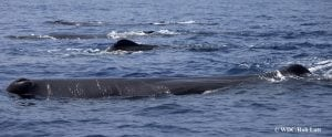 Early warning signs signalled collapse of whale numbers