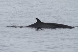 Norway increases whaling quota despite declining demand
