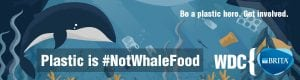 Nearly ten percent of whales, dolphins, and porpoises examined in Ireland found to have consumed plastics