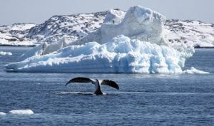 Bowhead whales sing jazz songs