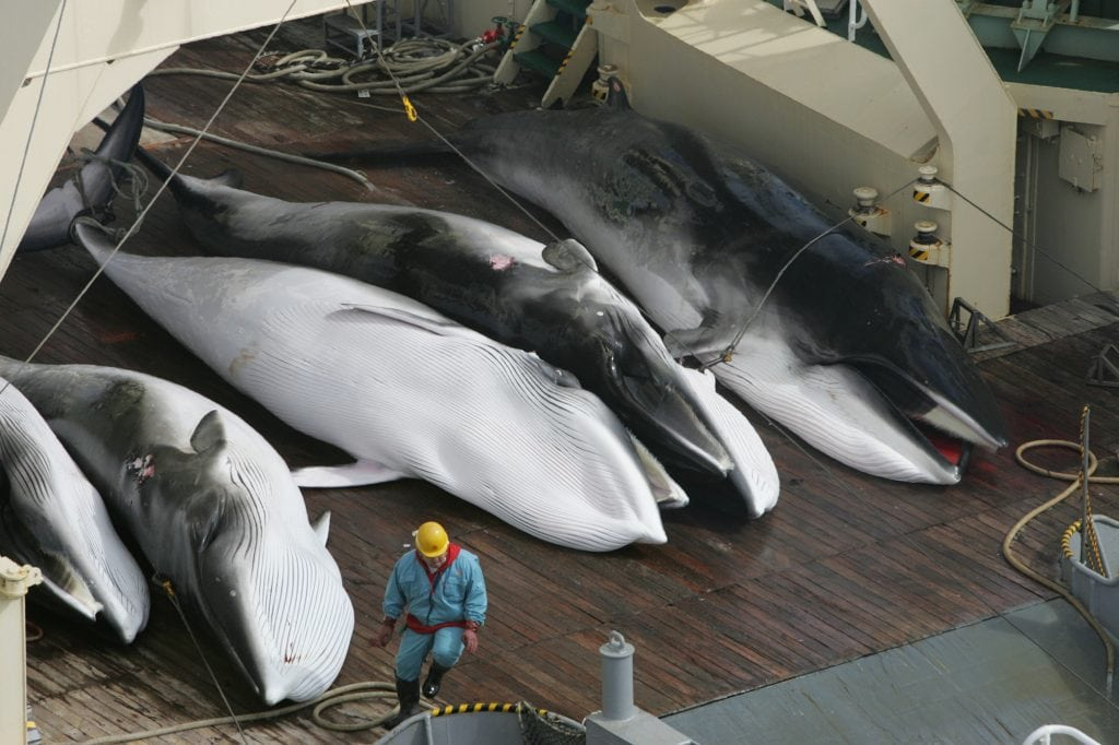 Whaling in Japan
