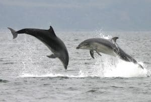 Success! Controversial plan for oil transfers between ships in important dolphin habitat dropped