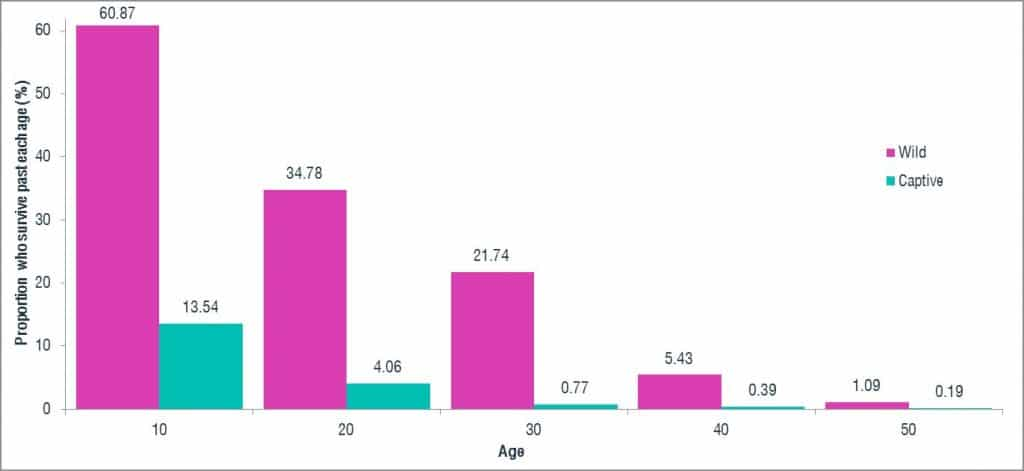 Proportion of dolphin surviving in captivity by age