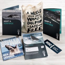 adopt a humpback pack
