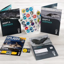 adopt a humpback kids pack
