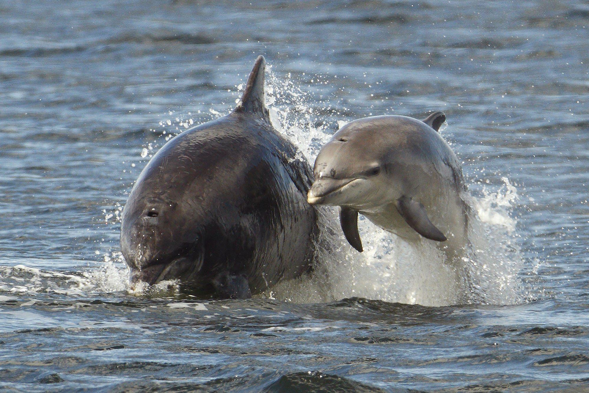 Adopt a dolphin Mischief