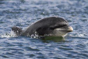 Adopt a dolphin Moonlight