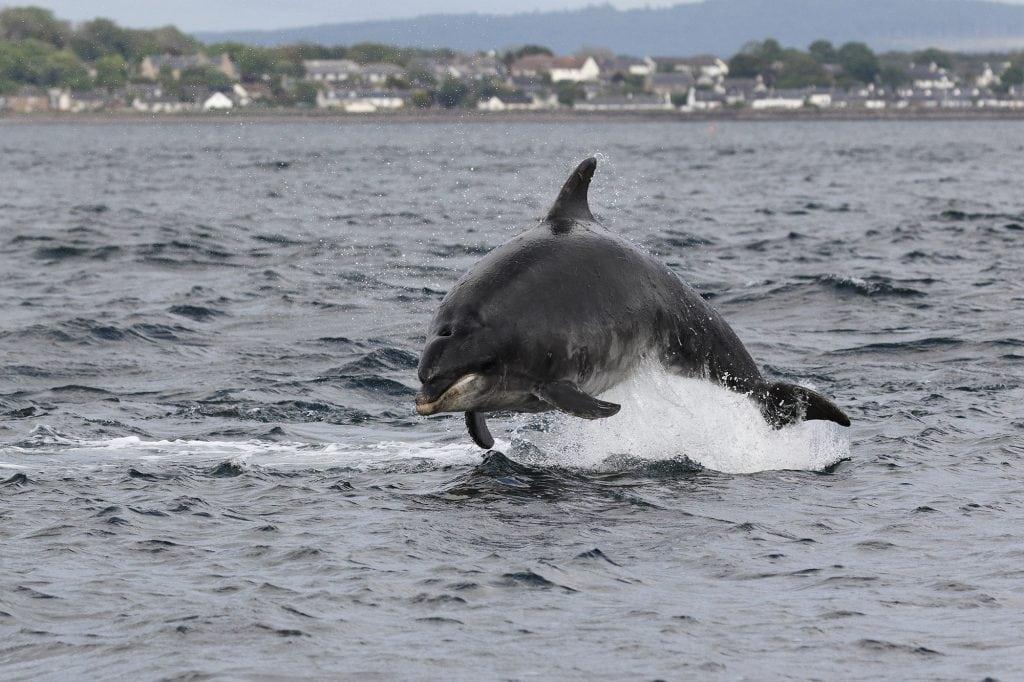 Adopt a dolphin Sundance