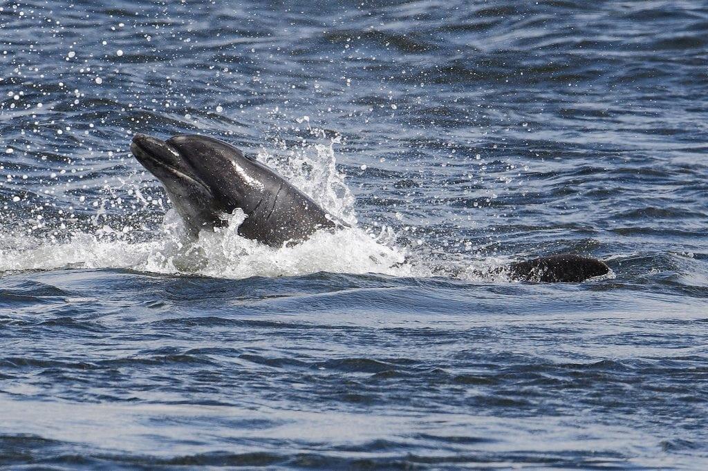 Adopt a dolphin Rainbow