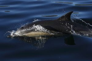 Scientists call on EU and Member States to take action to prevent dolphin deaths