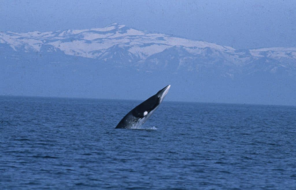 How we're tackling whaling in Norway