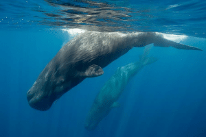 Think twice before booking a luxury 'snorkel with whales' safari