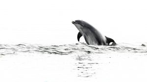 Still no decision by Welsh government on harmful dredging