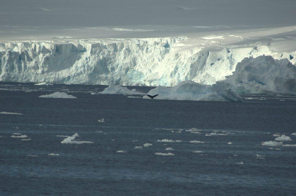 humpback-antarctica-marta-hevia
