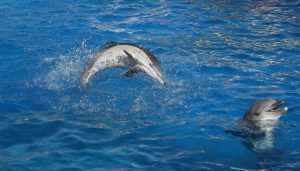 Ecuador introduces welcome measures to prevent dolphin imports for captivity shows