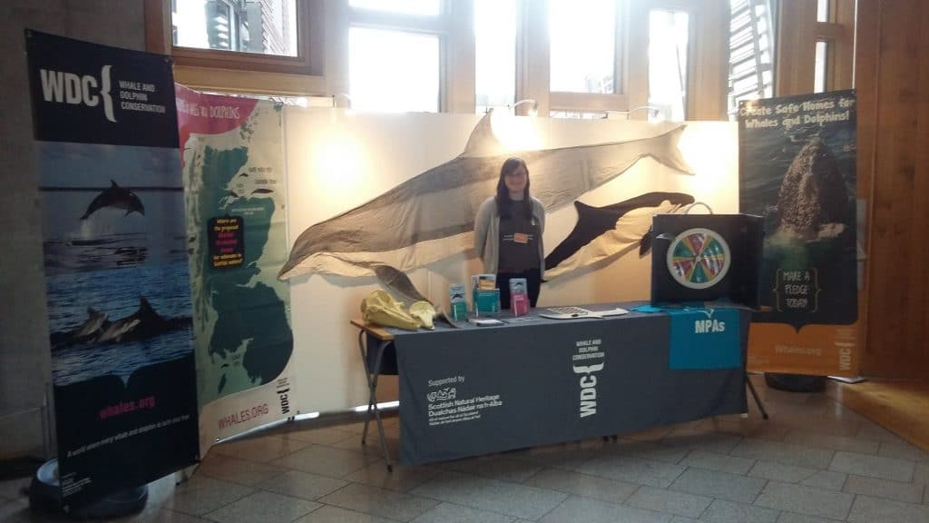 We take whales and dolphins to Scottish Parliament