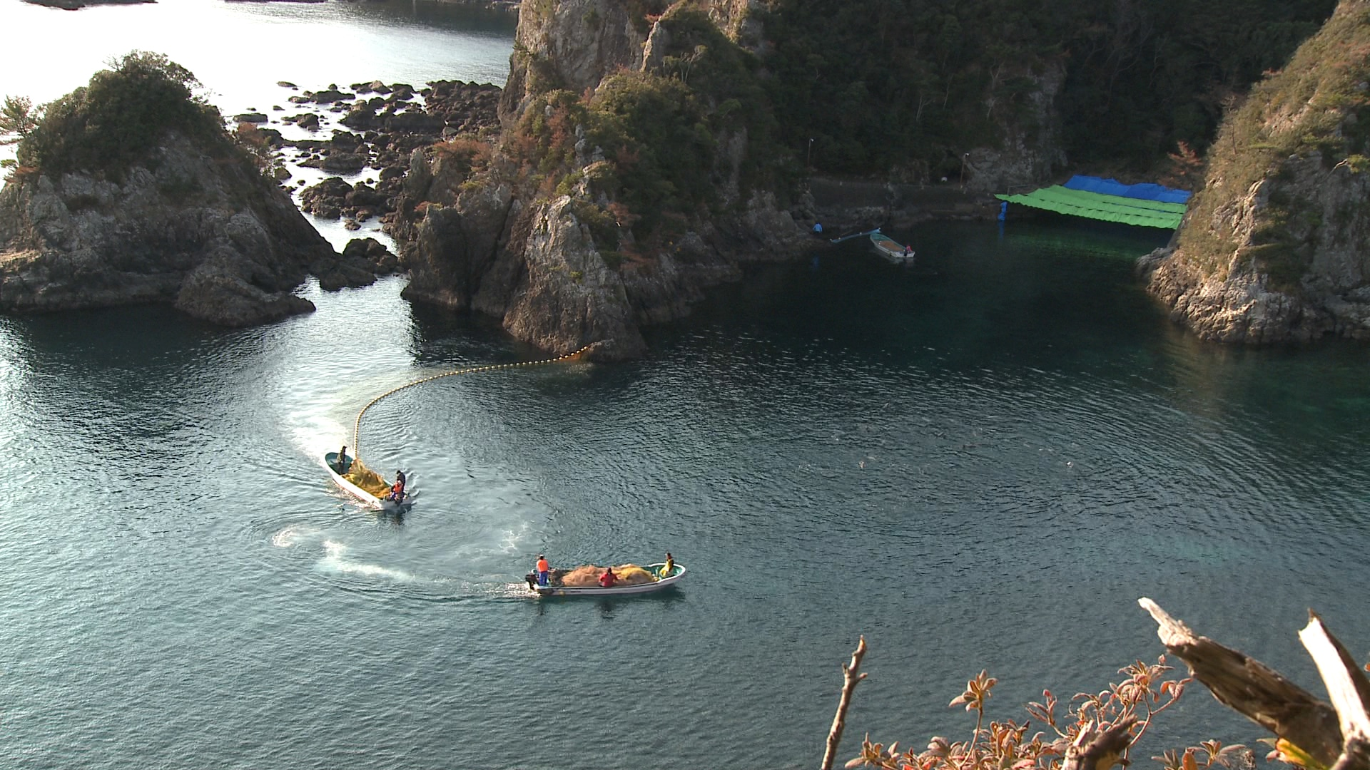 This is the cove in Taiji, Japan. Dolphins are herded into the area that is section off with tarpaulin