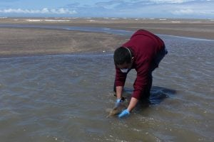 Releasing stranded Franciscana calf