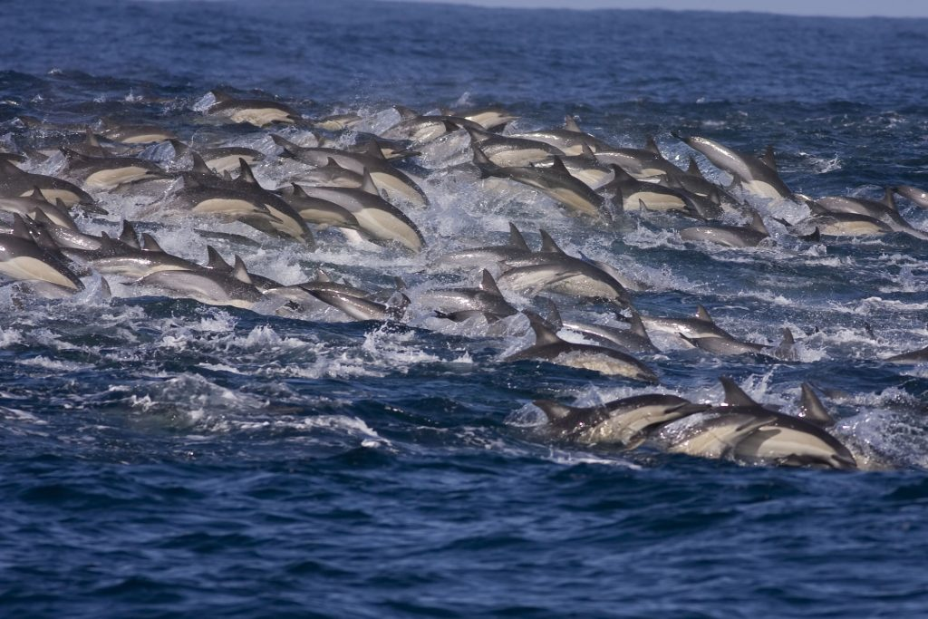 Putting whale and dolphin welfare on the agenda