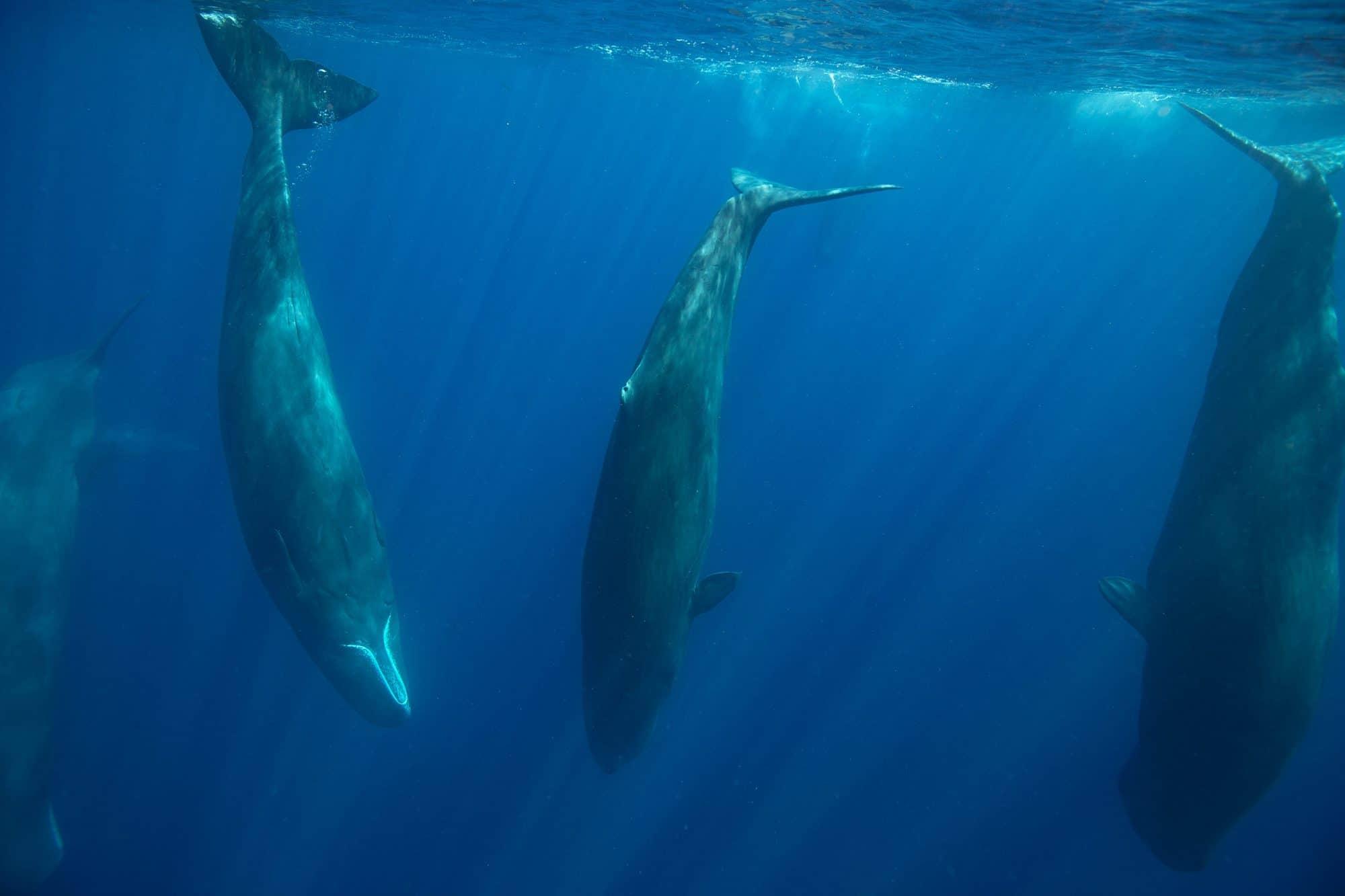 A magical sperm whale encounter