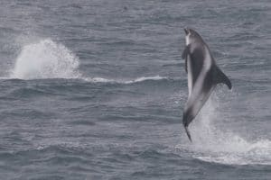 Dolphins, dolphins everywhere!