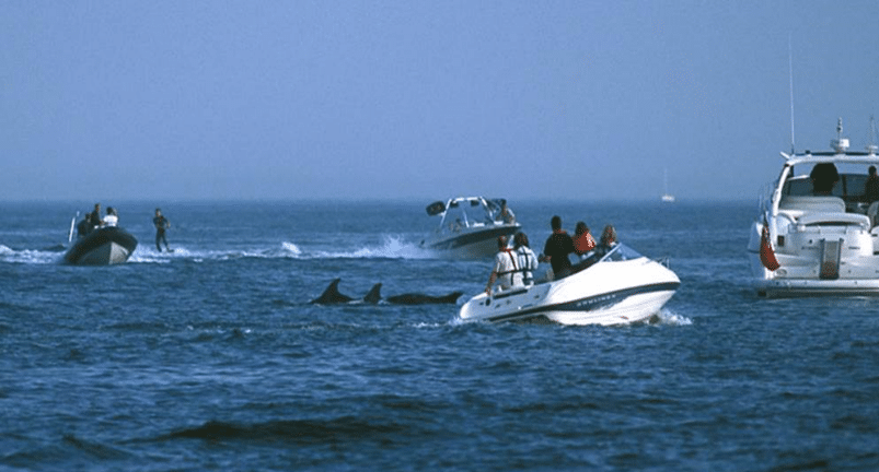 Jet skis disturbing dolphins in Poole Bay, UK