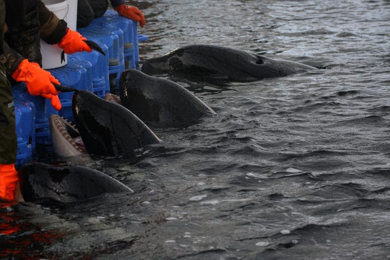 Russian company behind infamous 'whale jail' is fined